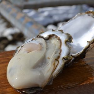 oyster_sasaki